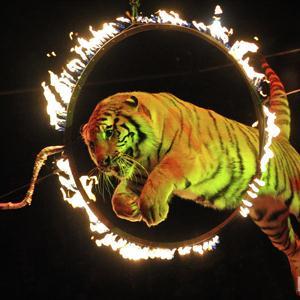 Цирки Аксая