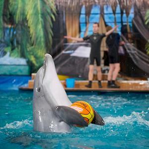 Дельфинарии, океанариумы Аксая
