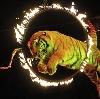 Цирки в Аксае