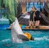 Дельфинарии, океанариумы в Аксае