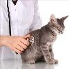 Ветеринарные клиники в Аксае